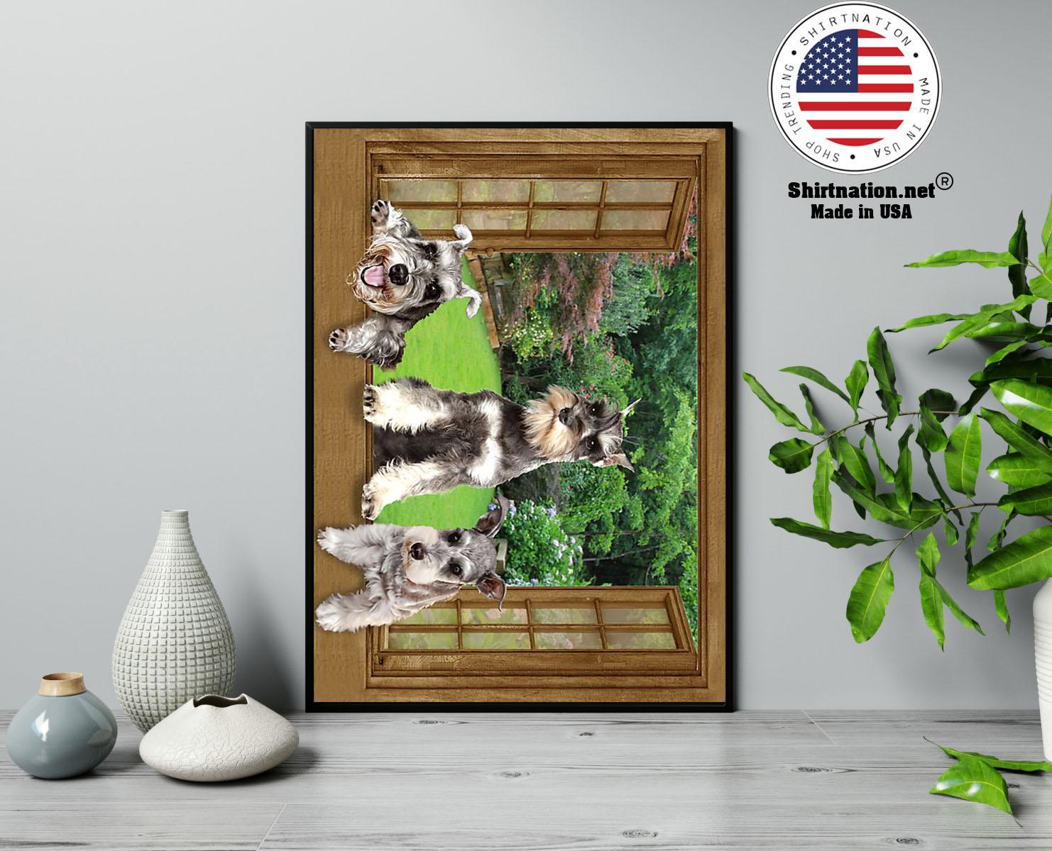 Schnauzer dog view window poster 13
